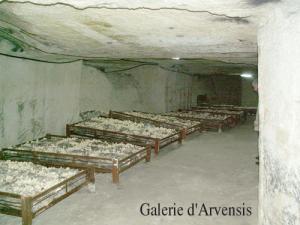 La cave champignonnière à BOURRÉ